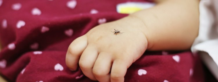 Image of a mosquito on a baby's hand.